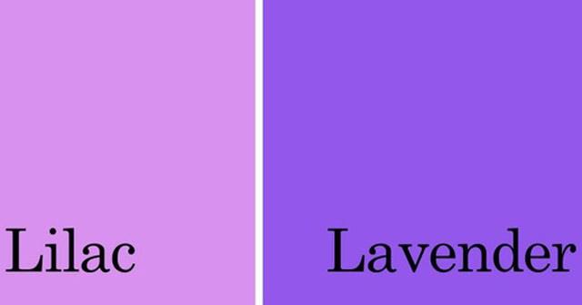Tím lilac là màu gì? Cách phối đồ với màu tím đẹp