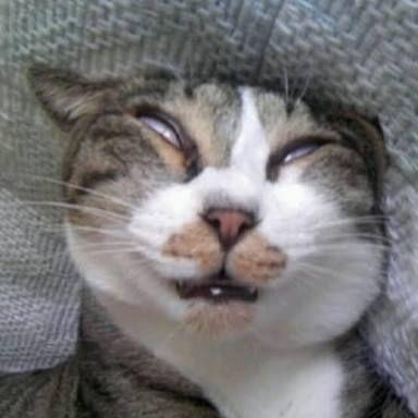 hình nền hot mèo ngáo