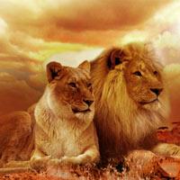 Những ngày lễ quốc tế dành cho các loài động vật