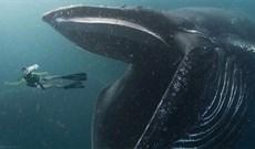 Con người có thể sống trong bụng cá voi?