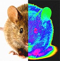 Công nghệ nano giúp phục hồi thành công thị lực ở chuột bị mù