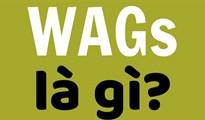 WAGs là gì? Những nàng WAGs 'nóng bỏng nhất thế giới'