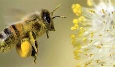 20 sự thật thú vị về loài ong không phải ai cũng biết