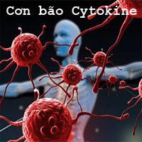 Cơn bão cytokine là gì?