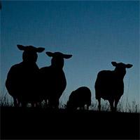 Các loài động vật ăn đêm đang dần biến mất, nguyên nhân do đâu?