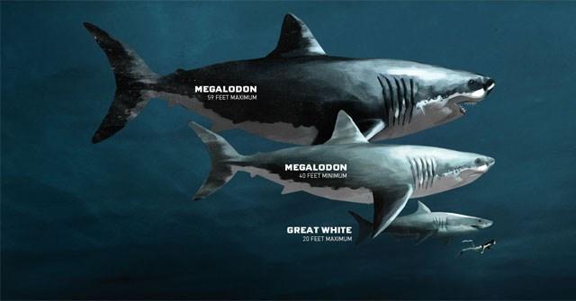 Xác định được kích thước chính xác của siêu quái vật Megalodon