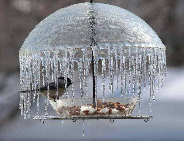Chiếc ô làm từ băng tuyệt đẹp che chắn cho chú chim