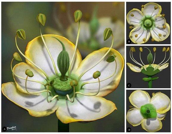 Hình ảnh đóa hoa 15 triệu năm tuổi được phục dựng 3D.