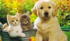 5 bài văn tả con vật hay nhất