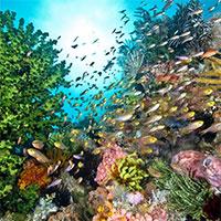 Điểm mặt những sinh vật nguy hiểm nhất sống trong các rạn san hô trải dài trên toàn thế giới