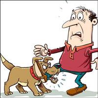 Tại sao có người hay bị chó cắn?