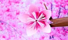 Cách làm hoa đào giấy, gấp hoa đào bằng giấy