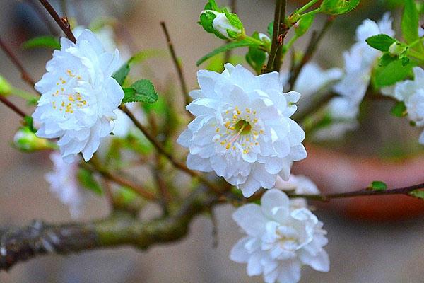 Tiết lập Xuân là gì?