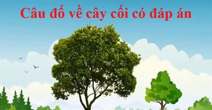 20 Câu đố về cây cối cho trẻ