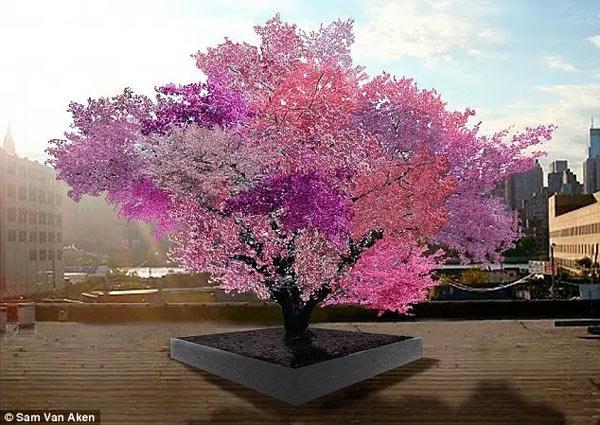 Cây có hơn 40 loại quả