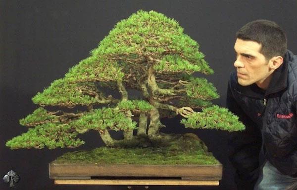 Pinus Silvestris, của Stefano Frisoni