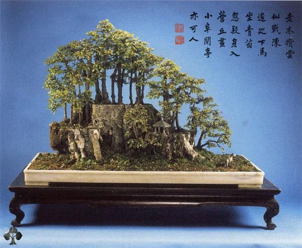Cây phong cảnh Penjing của Yee-sun Wu
