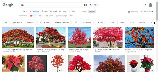 Kết quả tìm kiếm sau khi lọc