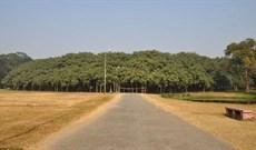 Choáng với cây đa khổng lồ nhất thế giới tán cây phủ rộng 14.000 m2