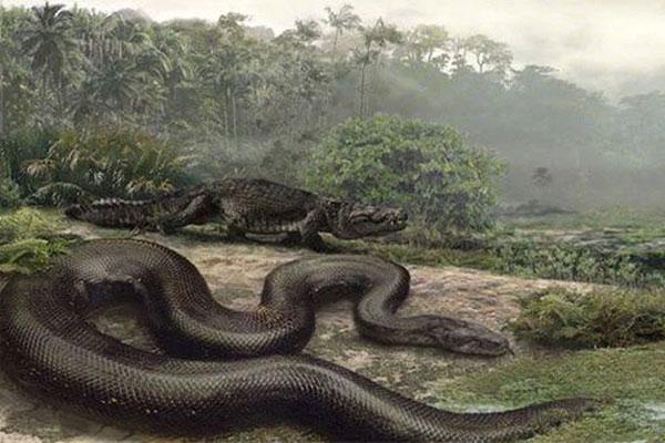Loài rắn to lớn nhất lịch sử