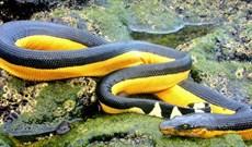 Những 'kỷ lục gia' đáng sợ trong thế giới loài rắn