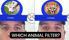 Cách tải filter bạn là con vật nào trên Instagram