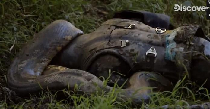 Nhà nghiên cứu tự nguyện làm mồi để trăn Anaconda nuốt vào bụng, cái kết sẽ ra sao?