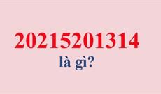 20215201314 là gì?