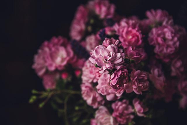 hoa mau don hinh nen may tinh
