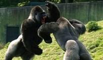10 cuộc chiến ấn tượng nhất trong thế giới động vật