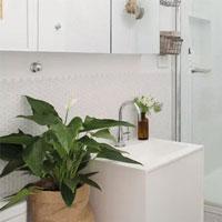 Các loại cây thích hợp trồng trong nhà vệ sinh giúp khử mùi, làm sạch không khí