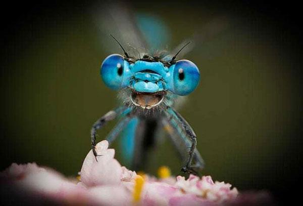"""""""Đừng lo lắng. Hãy hạnh phúc!"""" - là tiêu đề của bức ảnh chụp một chú chuồn chuồn vui vẻ trong rừng của nhiếp ảnh gia Axel Böcker."""