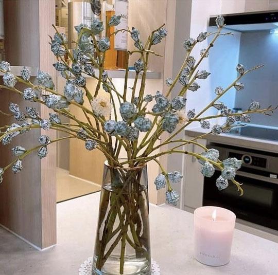 Hoa bạch đàn